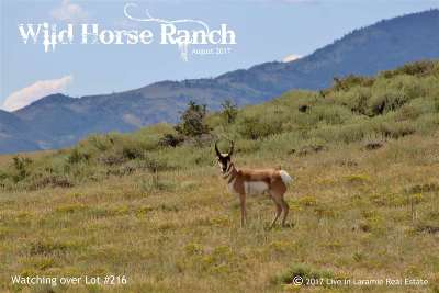 Laramie Residential Lots & Land For Sale: 216 Wild Horse Ranch