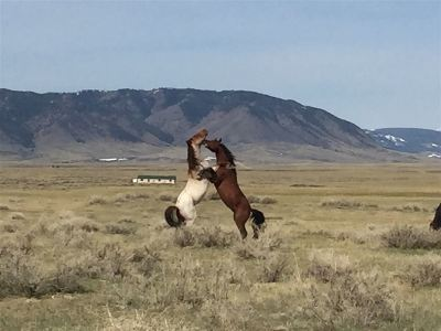 Laramie Residential Lots & Land For Sale: Lot 161 Wild Horse Ranch