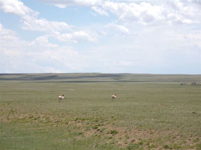 Rock River WY Residential Lots & Land For Sale: $17,500