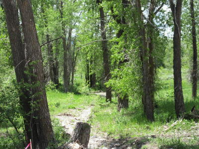 Star Valley Ranch Residential Lots & Land For Sale: 1928 Sunrise Mountain Place