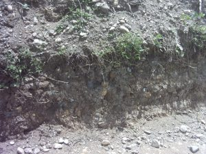 tanah entisol