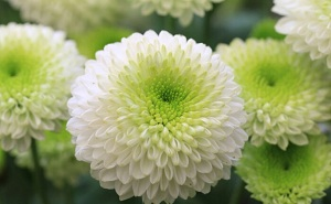 4 Jenis Flora di Jepang Serta Fungsi dan Persebarannya