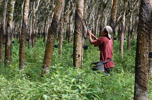 3 Contoh Hutan Buatan Beserta Fungsi dan Penjelasannya