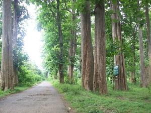 4 Contoh Hutan Lindung di Indonesia