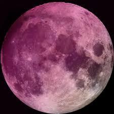 "Fenomena Pink Moon: Bulan Berwarna ""Pink""?"