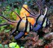 11 Contoh Fauna Indonesia Bagian Tengah