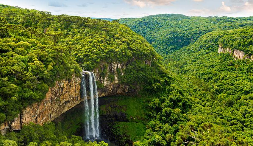 Karakteristik Hutan Amazon Hingga Fakta Uniknya