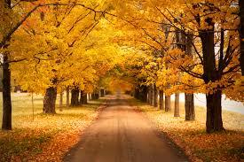 Musim Gugur : Pengertian – Karakteristik – Waktu Terjadinya