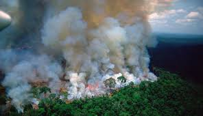 5 Penyebab Kebakaran Hutan Amazon Serta Dampaknya