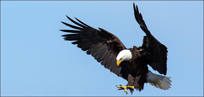 8 Jenis Fauna di Amerika Serikat yang Khas dan Langka