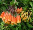 Inilah Daftar Flora dan Fauna Negara Ekuador