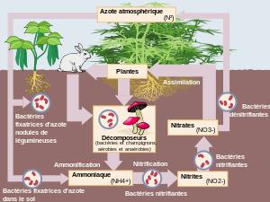 Inilah 5 Tahap Siklus Nitrogen Pada Tanah Beserta Penjelasannya