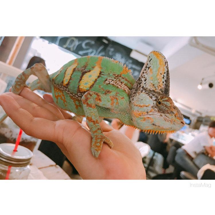 カフェ 爬虫類