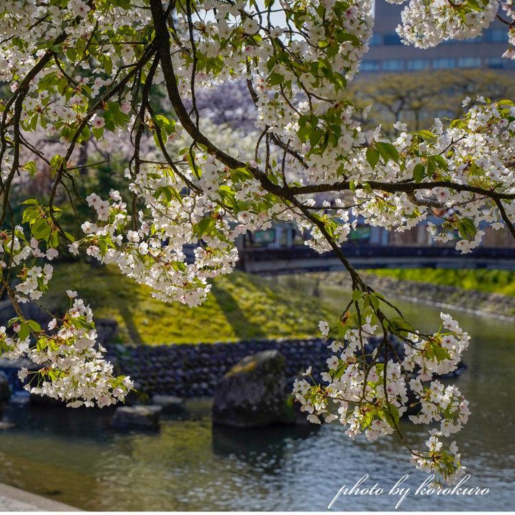 富山城公園松川ベリ