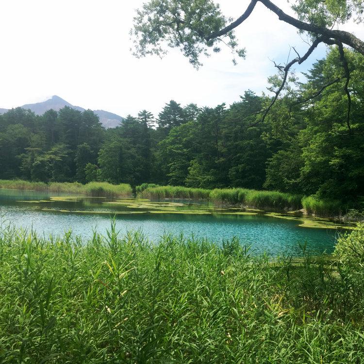 Yukinkoさんの投稿/五色沼湖沼群 | ことりっぷ