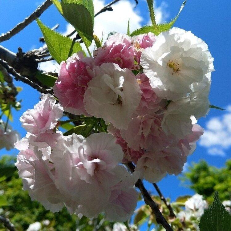 Gosford/Edogawa Commemorative Garden
