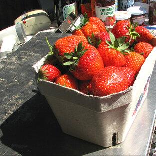 Erdbeeren Funck