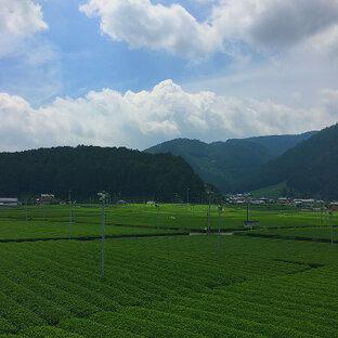 大井川鐵道の車窓から