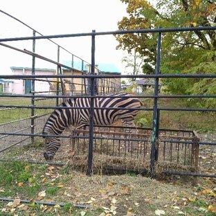 おびひろ動物園