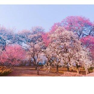 羽根木田公園