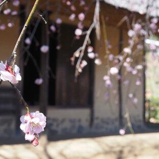 町田薬師池公園 四季彩の杜 薬師池