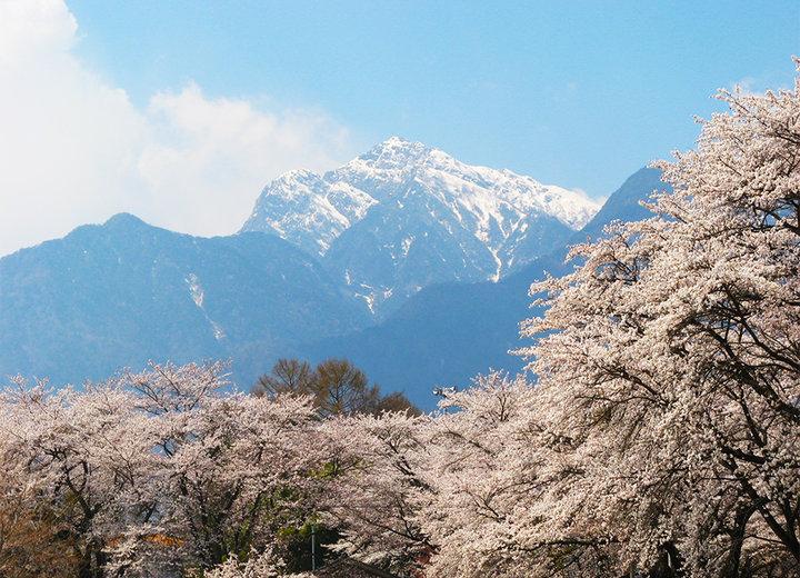 桜の名所と旬のグルメを満喫する、癒しの春旅へ