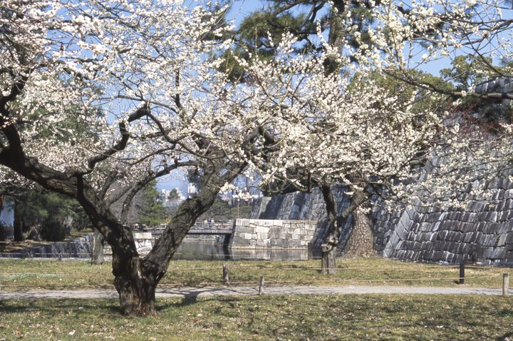 春の二条城周辺をうららかさんぽ