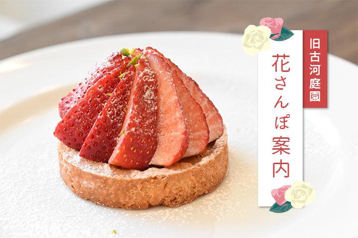 【東京】5/6ー5/31 旧古河庭園 春のバラまつり