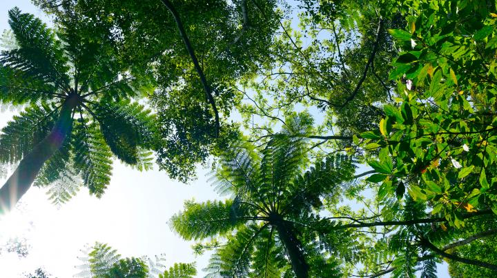 【連載・暮らしと、旅と…】奄美大島・豊かな自然を感じるエコツアー