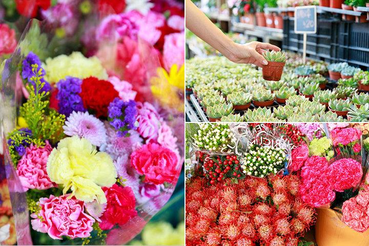 花に小鳥、金魚も!極彩色のマーケット街をフォトさんぽ