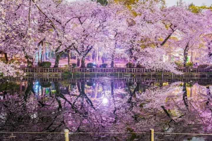 春のピクニック♪フード&ドリンク持ち込みOKの都内お花見スポット6選