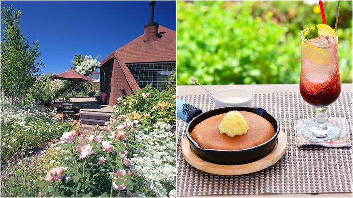 もうすぐ満開!  バラに囲まれて、ふわふわパンケーキでひと休み。山形「ミツバチガーデンカフェ」