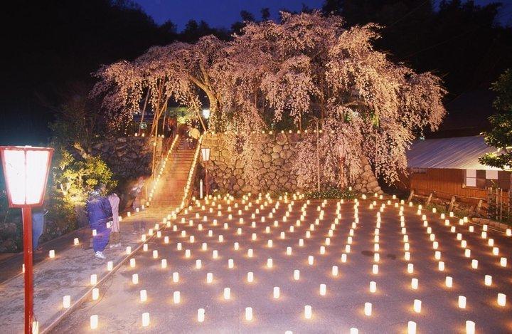 【第5位】朝から夜まで楽しみたい。知られざる京都の桜スポット4選