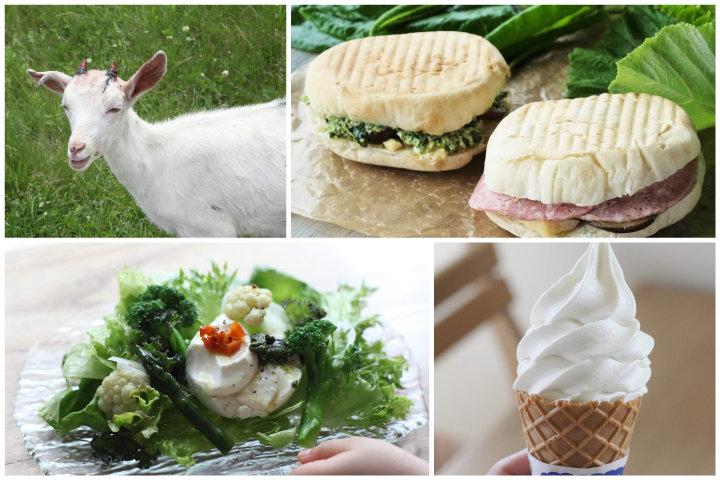 自然や動物と触れ合いながらチーズを満喫。北海道・十勝のチーズ工房巡り