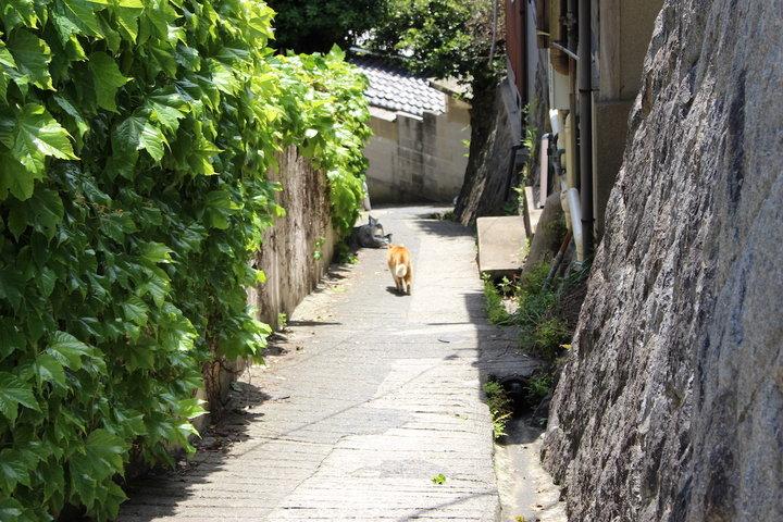 町歩きしながら、古寺とご縁を結んでいく「尾道七佛めぐり」