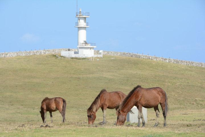 天然記念物のヨナグニ馬が戯れる島の最東端・東崎(あがりざき)
