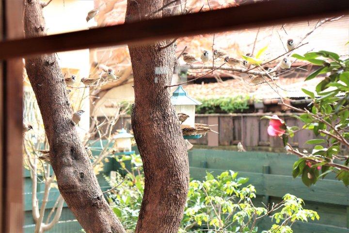 庭に訪れるかわいい小鳥たちとネコ