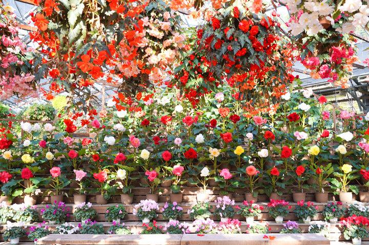 花と鳥のテーマパーク「松江フォーゲルパーク」