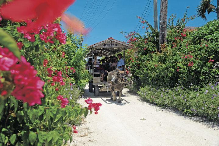 沖縄の原風景が残る竹富島を水牛車で ゆったり島さんぽ