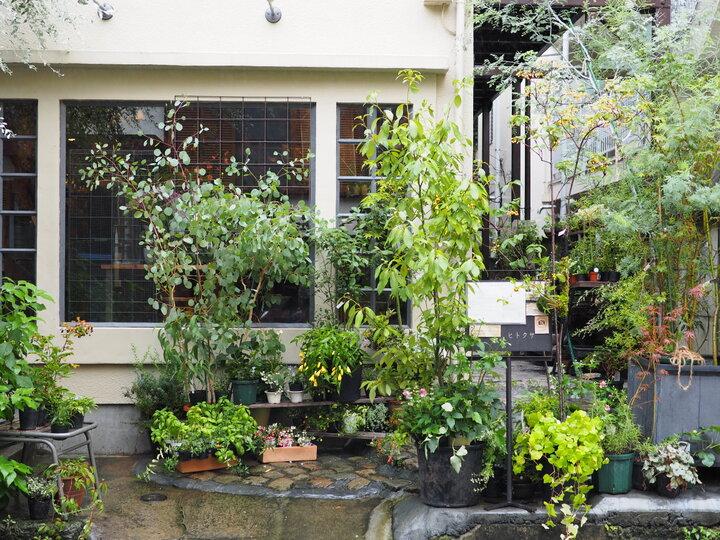 珍しいお花や植物がいっぱいの花屋カフェ