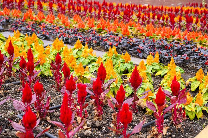季節ごとに雰囲気が変わる「四季の庭」。新品種の花も