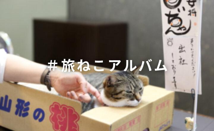 #旅ねこアルバム 写真投稿コンテスト