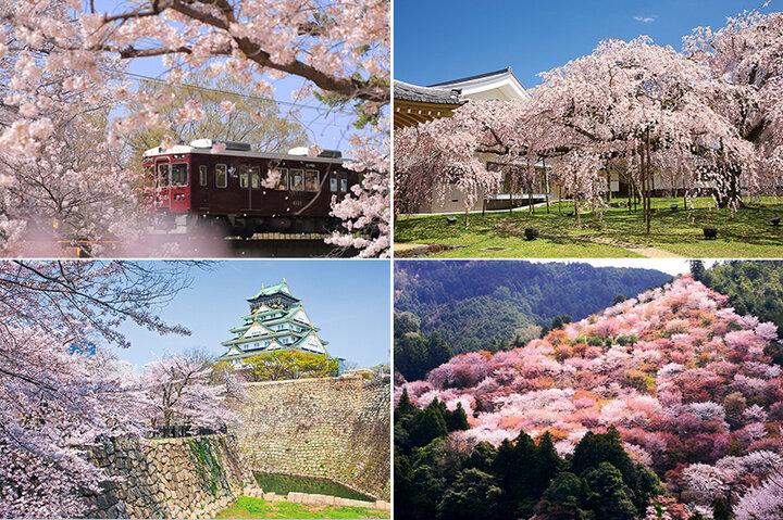 名将も愛した醍醐寺のしだれ桜から、信仰の地・吉野山を淡く染める山桜まで。西日本の桜の名所6選