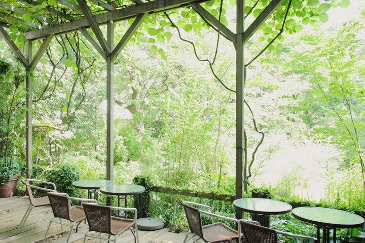 まるで緑の楽園。美しい森の風景に包まれる都内のヒーリングカフェ「フェリーチェ」