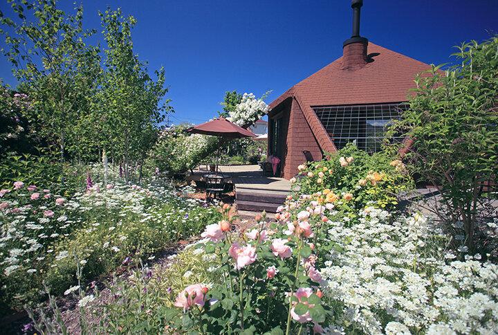 色とりどりのバラが咲く癒しのカフェ「ミツバチガーデンカフェ」