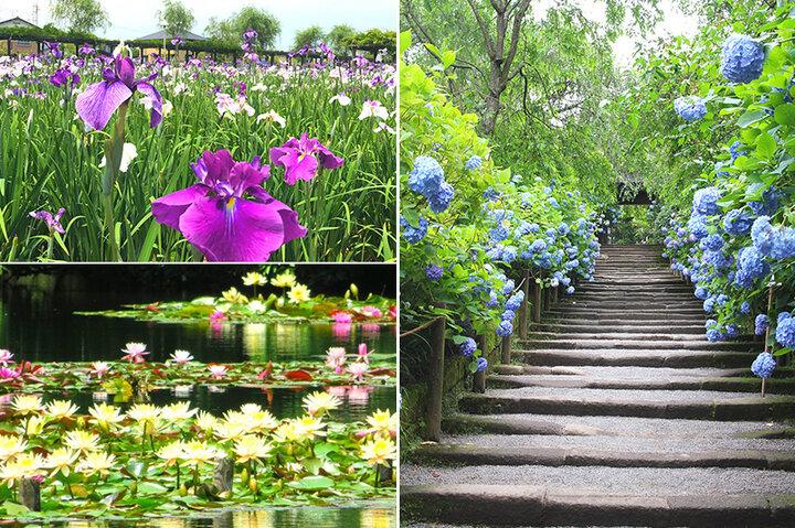 雨や水辺がよく似合う関東の花の名所5選