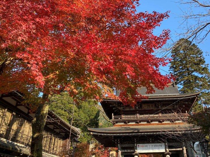 【岐阜の秋さがし】門前町から続く紅葉が壮観な谷汲山華厳寺へ/揖斐川町