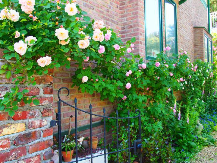 すてきなお家の庭をめぐりましょう