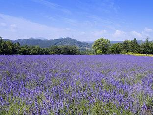 爽やかな高原リゾートで体験&グルメ&温泉を満喫「メナード青山リゾート」