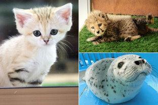かわいい姿をおうちでも楽しめる♪動物の赤ちゃん4選